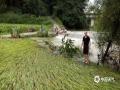 中国天气网广西站讯 受高空槽、切变线影响,12日-14日,广西遭遇新一轮强降雨袭击,桂林、柳州、河池、钦州、贺州等市多地出现城乡积涝、中小河流超警戒水位洪水、山体滑坡等灾害,给群众的交通出行及生活生产造成了不利影响。图为13日,河池市宜州区德胜镇赛平村农田被淹。(图/李严萍 文/赵祖华 刘婷 李严萍 梁月丽 蒋敏霞 吴健杰)