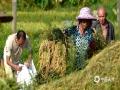 中国天气网广西站讯 正值早稻收割的季节。近日,马山林圩镇东庄村的农民们顶着烈日忙收割稻谷。预计未来一周马山多阵雨天气,提醒农民朋友,湿热天,小心预防中暑,建议早出、晚归,避开中下午最炎热时段。(文/赖雨薇 图/陆丽红)