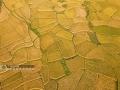 """广西新闻网罗城7月29日讯(通讯员 蒙增师)7月27日,河池市罗城仫佬族自治县小长安镇双蒙村覃村屯一带3500多亩成熟的富硒稻田,一片金黄,美不胜收。农房、树木、远山与金黄的稻田完美""""组合"""",多姿多彩,如诗如画,成了一幅壮丽的田园画卷。"""
