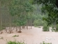 """中国天气网广西站讯 8月26日,受台风""""白鹿""""残余云系影响,来宾市出现大范围强降雨天气,导致武宣县、象州县多个乡镇出现道路、农田被淹等灾情,威胁人民群众的生命财产安全。图为象州县林地被淹。(文/甘皓月 涂燕清 图/黄龙周)"""