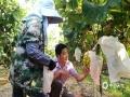 """中国天气网大通彩票注册站讯 中秋将近,来宾市兴宾区凤凰镇""""阳光玫瑰""""葡萄园的葡萄成熟了,吸引众多游客入园采摘,既可体验劳动乐趣又可以品尝新鲜葡萄。  8月份以来,来宾已经出现了20天35℃或高于35℃的高温天气,26日享受过""""白鹿""""带来的短暂雨水清凉后,27日再度出现高温。虽然夏日当空,烈日炎炎,但仍挡不住游客采摘的热情。(图文/吴凤莹)"""