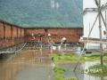 中国天气网讯 8月31日晚,受地面弱冷空气和低层辐合带共同影响,隆安县普降大到暴雨,局地大暴雨,隆安县气象局发布了暴雨红色预警信号。强降雨导致隆安县多地出现农作物被淹、路面积水、乡镇内涝、河水暴涨等灾情。渌水江乔建水文站于9月1日10时出现87.0m的洪峰水位(警戒水位85.0m),超警2.0米。(图文/林扬璐)