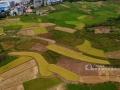 """广西新闻网柳州9月20日讯(通讯员 覃庆和)9月19日,临近""""秋分""""时节,柳州市融安县的晚稻进入了收割尾声,还未收割稻谷与收割后的稻田、新种植的农作物以及村庄形成了别样的田园风光,传递着秋季收获的喜悦。"""