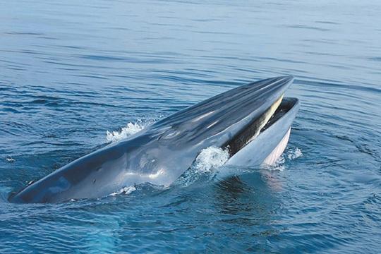 """鲸鱼到涠洲岛""""闹海"""""""