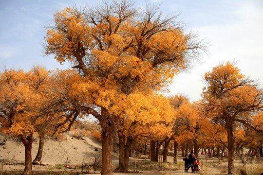 内蒙古最美秋色胡杨林