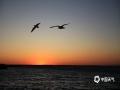 中国天气网广西站讯 居延海位于内蒙古阿拉善盟额济纳旗达来呼布镇东北约40公里的巴丹吉林沙漠北缘,深秋10月,在居延海看日出是一件非常美妙的事。当清早太阳从地平线下缓缓升起,将天空渐渐染得火红,这时,醒来的水鸟在低空盘旋飞翔,微风吹过,湖面碧波荡漾、芦苇随风摇曳,呈现在人们眼前的就是一片美丽且壮观的景象,令人惊叹。(图文/莫申萍)