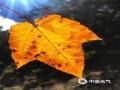 十月的香格里拉是上帝推翻的颜料盘,美得如梦如画,碧云蓝天、枝头嫣红、落叶秋黄,连绵的群山到无际的草地都被这撩人的秋色穿上了新衣。(文/李安琪 图/李明凤)