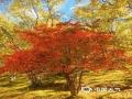 中国天气网讯 十月的香格里拉是上帝推翻的颜料盘,美得如梦如画,碧云蓝天、枝头嫣红、落叶秋黄,连绵的群山到无际的草地都被这撩人的秋色穿上了新衣。(文/李安琪 图/和丽云)