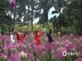 中国天气网广西站讯 须蕊迎风舞,醉蝶扑面来。近日,柳州市雀儿山公园的12万株醉蝶花正在热烈绽放,盛开的醉蝶花有紫、粉、玫红、樱桃红等花色,微风吹动,朵朵花儿犹如翩跹起舞的彩蝶,美不胜收。明后两天正值周末,约上身边的亲朋好友,漫步在这醉蝶花海之中,定能让您流连忘返。(图文/韦莉)