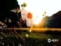 中国天气网广西站讯 金秋十月,宾阳秋意渐显,稻田喜换金装。(图/何少芸  文/苏庆红)