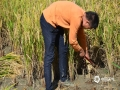中国天气网广西站讯 金秋十月,隆林秋意渐浓,金黄色的水稻将大地装扮成五彩斑斓田园美图,农民群众也正在抓住当前晴好天气抢收水稻。(图文/尹华军)