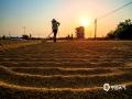 中国天气网讯 稻穗飘香,金黄满地,又到一年秋收时。连日来,北海各地农民趁着晴好天气,陆续开镰收割晚稻,乡村田间呈现一片繁忙的收割景象。(文/刘宇菲 图/吴杰)