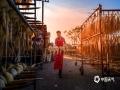 中国天气网讯 秋季正是海鲜肥美的季节。晒,则是保存海鲜最直接也是最古老的方式,早在唐朝的时候海边人民就将吃不完的海鲜晒成干来保存,所以也多了一种吃海鲜方式。眼下广西空气干燥、阳光充足,是晒鱿鱼最好的时节。(文/刘宇菲 图/吴杰)