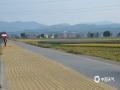 中国天气网广西站讯 自11月初以来,百色田东一直维持着多云转晴的天气,昼夜温差大,有利于晚稻灌浆成熟。当下,田东县林逢镇一望无边的田野里已是一片金黄的景象。趁着天气晴好,当地农友也纷纷忙碌了起来,抓紧时间对成熟的晚稻进行收割并及时晾晒。(图文/顾雄萍)