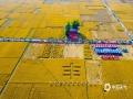 中国天气网广西站讯 近期,防城港东兴天气连日晴朗,非常有利于晚稻成熟。目前,这里的数百亩晚稻已陆续进入成熟收割期,放眼望去一片金黄,就宛如一幅铺开在大地的金色画卷,美不胜收!(图/李国铭 文/韦秀凤)