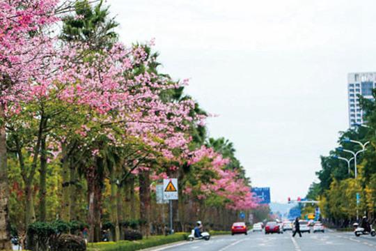 初冬花盛开龙城美如春