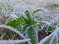 广西柳州等地迎今年初霜