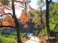 中国天气网广西站讯 又是一年枫叶正红时,柳州市融安县枫叶逐渐变红,开始进入最佳观赏期,蓝蓝的天空,清清的溪水,红红的枫叶,吸引了游客驱车前来观赏。未来两天,天气晴朗唱主角,赏枫叶正当时。(文/甘皓月 图/汤丽莎)