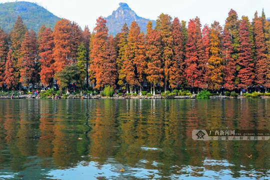 桂林迎冬日最佳观赏期