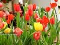 """广西新闻网南宁1月11日讯(记者 潘晓明 实习生 秦艳宁 杨澜)1月10日,2020年迎春花市在南宁国际会展中心举行,吸引了不少市民前来观看选购,上千种花卉洋溢着花香,为新春增添更加浓郁的年味气息。据悉,迎春花市是传统民俗文化盛会,一般在春节前夕举行。此次花市主题为""""壮美广西 花满邕城"""",将持续到1月18日。(广西新闻网实习生 秦艳宁 摄)"""
