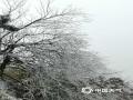 中国天气网广西站讯 1月13日,湖南衡山,银装素裹,树木被晶莹剔透的冰包裹着。走到山顶,在祝融峰上还可以观云海,游人欢喜不已。(图文/苏庆红)
