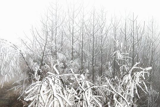广西桂林资源金紫山雾凇美如水墨画