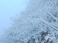 中国天气网广西站讯 受冷空气影响,18日桂林资源隘门界现新年首场雾凇美景,树木银装素裹,吸引许多游人前来观赏。(图/古玉珍 文/刘英轶)