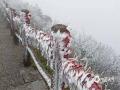 中国天气网广西站讯 受到冷空气影响,除夕(24日)开始南宁市气温骤降,大年初二(26日)这天,大明山的气温下降到零度以下,高海拔地区出现今年第一场雾凇景观。(文/赖雨薇 图/大明山景区提供)