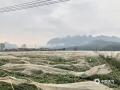 中国天气网广西站讯 14日晚到15日凌晨,受低空切边线和强冷空气共同影响,平果县出现了一次中到大雨,局部暴雨,并伴有雷电大风等强对流天气,导致平果县太平镇蔬菜产业示范区部分蔬菜大棚被风刮破。(文/何翔   图/平果县农业农村局)