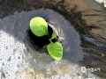 中国天气网广西站讯 今天,凌云暖阳高照,在凌云朝里一带,农民开始陆续破膜移栽烟苗。据了解,今年朝里乡种植烟叶面积大约有600余亩。(图文/杨少秋)