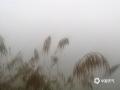中国天气网广西站讯   2月23日早晨,凌云局地遭浓雾笼罩。在凌云泗城镇品村至逻楼镇安水村一带,能见度更是不足50米,截至发稿时间,当地雾气还未消散,提醒司机朋友注意安全出行。 据百色市气象台预报,未来两天凌云县以阴天为主,局地有阵雨并伴有浓雾天气。(图文/杨少秋)
