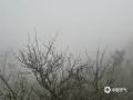 中国天气网广西站讯   2月23日早晨,凌云局地浓雾莽莽。在凌云泗城镇品村至逻楼镇安水村一带,能见度更是不足50米,截至发稿时间,当地雾气还未消散,提醒司机朋友注意安全出行。 据百色市气象台预报,未来两天凌云县以阴天为主,局地有阵雨并伴有浓雾天气。(图文/杨少秋)