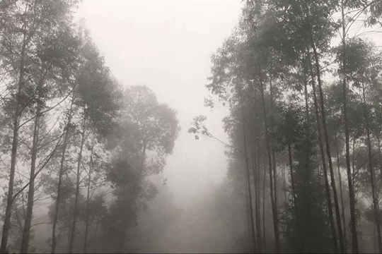 武鸣上江出现大雾天气
