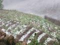 中国天气网广西站讯 3月22日18时30分左右,百色市右江区龙川镇花红村、汪甸乡乐益出现冰雹、雷电等强对流天气,冰雹直径约20毫米,造成花红村那平屯、平法屯、花屯农作物受到不同程度的损坏。(图文/李建)