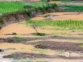 中国天气网广西站讯 6月2日开始,广西迎来新一轮强降雨,导致桂林、河池、柳州等市多地出现城乡积涝、农田及道路被淹等灾情。图为3日河池市东兰县泗孟乡被大量泥沙冲毁的稻田。(图/罗昌胜 文/罗昌胜 邓苏花雨)