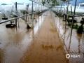 """中国天气网广西站讯 7月10日00时至08时,资源县普降暴雨,局部大暴雨,并伴有打雷闪电。据气象监测站统计,资源县有8个自动站出现50毫米以上的暴雨,3个自动站出现100毫米以上的大暴雨,最大降雨量出现在资源县中峰车田湾自动站114.6毫米。强降雨导致中峰道路低洼处积水,农田被淹成""""河塘"""",丹霞红提葡萄示范园区汪洋一片。(图文/谭琼)"""