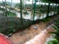 """中国天气网广西站讯 7月10日00时至08时,资源县普降暴雨,局部大暴雨,并伴有打雷闪电。据气象监测站统计,资源县有8个自动站出现50毫米以上的暴雨,3个自动站出现100毫米以上的暴雨,最大降雨量出现在资源县中峰车田湾自动站114.6毫米。强降雨导致中峰道路低洼处积水,农田被淹成""""河塘"""",丹霞红提葡萄示范园区汪洋一片。(图文/谭琼)"""