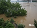 """中国天气网广西站讯 7月12日早上7时50分,柳江柳州水文站出现洪峰水位83.8米,超警戒水位1.3米。沿江多条道路被江水淹没,汪洋一片,已成""""泽国""""。由于洪水淹没地段比较深,不少市民又开始了""""滴滴打船""""的生活。目前水位正在缓慢下降,强降雨过程接近尾声。(图/李羿树 文/李宜爽)"""