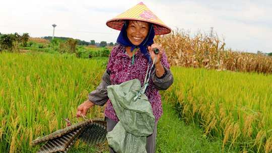 贵港农民顶着烈日播种