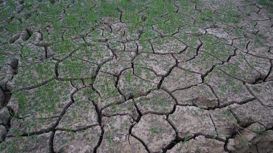 梧州气象干旱严重
