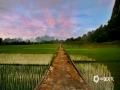 中国天气网广西站讯 近日,河池市金城江区长排镇清晨的云朵透着霞光,风吹动着秧苗,犹如一幅迷人的乡村风景油画。(图文/韦双双)