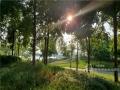 """近日,漫步邕江近江公园,江边的芦苇已经染上了秋日的金黄。秋高气爽,随手一拍,就是壮观的""""秋日大片""""。图为邕江边上的和煦秋日。(图文/洪妦源)"""