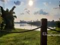 """近日,漫步邕江近江公园,江边的芦苇已经染上了秋日的金黄。秋高气爽,随手一拍,就是壮观的""""秋日大片""""。图为邕江近江公园一角。(图文/洪妦源)"""