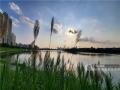 """近日,漫步邕江近江公园,江边的芦苇已经染上了秋日的金黄。秋高气爽,随手一拍,就是壮观的""""秋日大片""""。图为芦苇丛中眺望青山大桥。(图文/洪妦源)"""