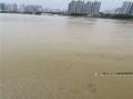 图为河中有不少的垃圾、树枝等随着湍急的河水从上游冲下来。(图/陈丽婕)