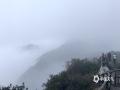 中国天气网广西站讯 秋雨加深了秋意,寒意渐浓。10月17日,昼夜大幅的温差使得桂林猫儿山浓雾环绕,而藏在浓雾里的小蘑菇,趁着游人不备,正在悄悄冒头,十分俏丽可爱!(图/林思豆 文/唐昌秀)