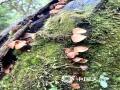中国天气网广西站讯 秋雨加深了秋意,寒意渐浓。10月17日,昼夜大幅的温差使得桂林猫儿山浓雾环绕,而藏在浓雾里的小蘑菇,趁着游人不备,正在悄悄冒头,十分俏丽可爱!(图/赵丽萍 文/唐昌秀)