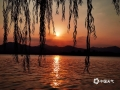 四时西湖四时景,西湖的美名不虚传。今天(20日),杭州西湖天晴气朗,傍晚时分,夕阳西下,众多游客在集贤亭附近观赏日落美景。秋日余晖将晚霞晕染成梦幻般的橘色,又洒落一湖金色,远处青山如黛,岸边垂柳依依,构成一幅美轮美奂的大自然奇景,宛若仙境一般。 (图/冯云忠 文/陈丽娜)