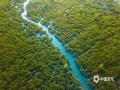 中国天气网广西站讯 11月11日,航拍广西钦州市茅尾海红树林保护区。夕阳西下,景色迷人,在河海相接的滩涂上生长着茂密的红树林,涨潮时,红树林没入海水下,故有海底森林之称。(图文/李斌喜)