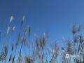 中国天气网广西站讯 11月12日,防城港上思县秋高气爽,山野风光和蓝天组成了一幅幅美丽的画卷。(图文/黄伟芬)
